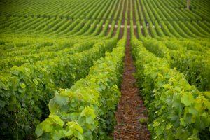 vue sur les vignes à dijon en 2021